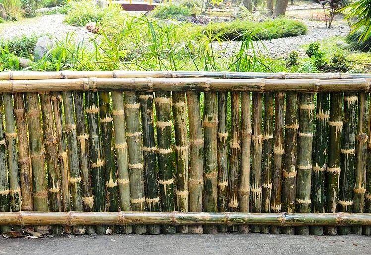 Model Desain Pagar Bambu Biasa