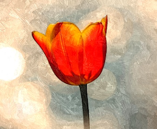 http://amajeto.com/games/amajeto_tulips/