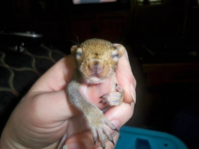 baby squirrel bella founded