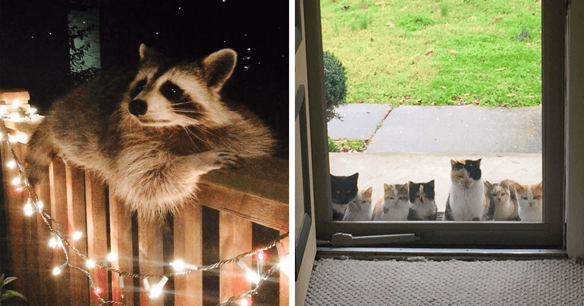 40 Sweet Pictures Of Animals Saying 'Hi' That Will Make You Grin From Ear to Ear!