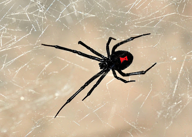 Black Widow hindi