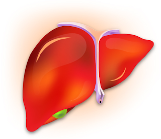 Hepatitis A - Liver