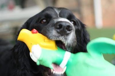 Show & Tell Tuesday: My doggie, Mia