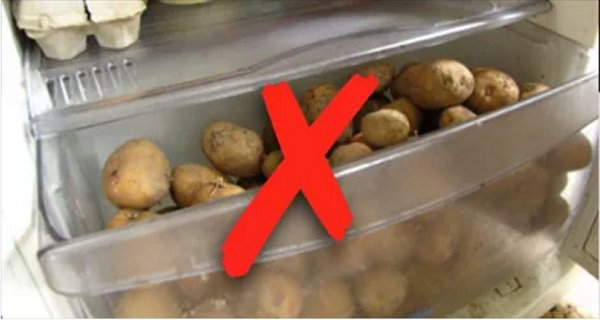 Potatoes In The Refrigerator