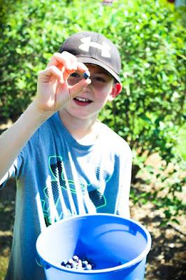 Picking blueberries at Thunderbird Farm in Broken Arrow