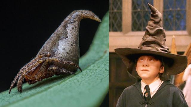 Nova espécie de aranha ganha nome em homenagem a Harry Potter