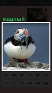 большое количество пищи в клюве держит жадная птица