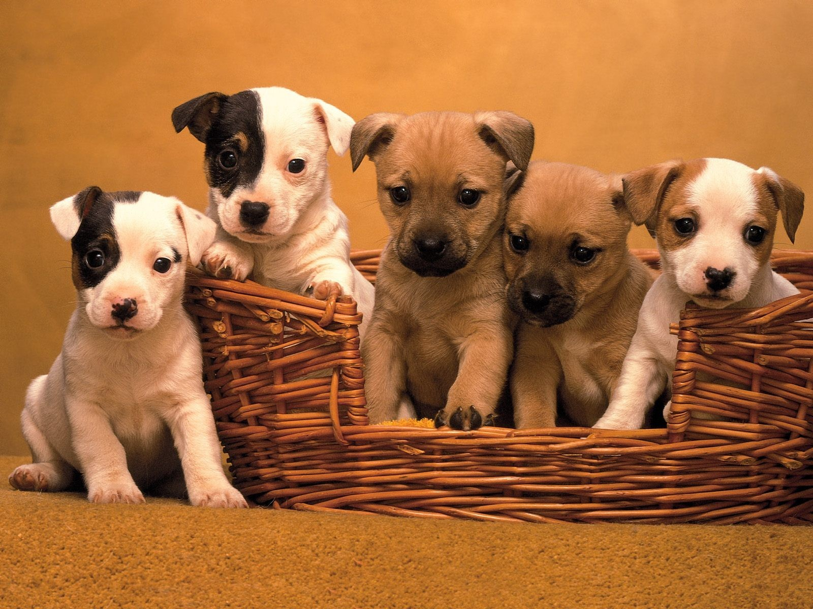 Puppies images 3-puppies...so nice! wallpaper and background ...