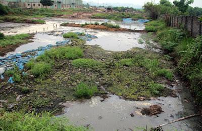 Một trang trại chăn nuôi gia công cho C.P tại Hòa Bình gây ô nhiễm môi trường. ảnh: V.T