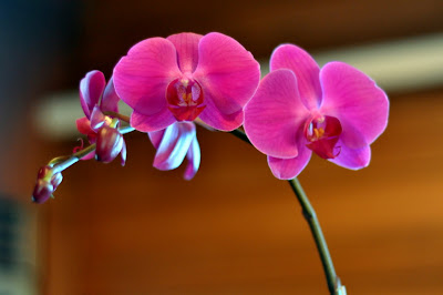 Orchid Centerpiece - Photo by Taste As You Go
