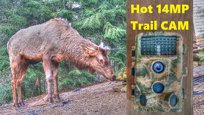 CamPark 14MP Trail Camera Test -  High Quality Low Price Wildlife Security CAM