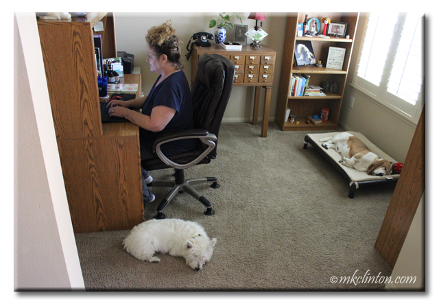 Woman at home desk with two dogs on the floor