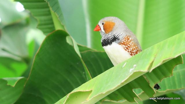 Blenheim Palace bird in butterfly house