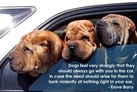 Dogs feel very strongly that they should always go with you in the car, in case the need should arise for them to bark violently at nothing right in your ear.