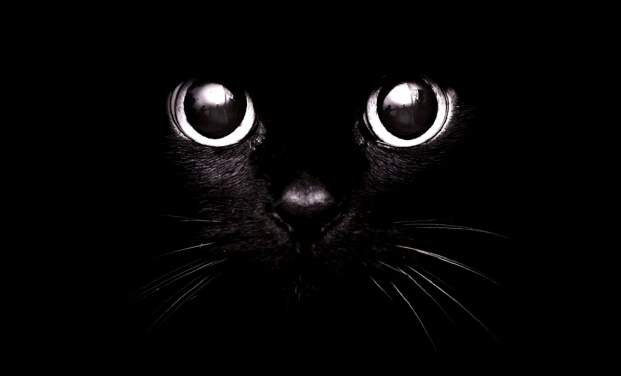 Cute Black Cat Wallpaper Hd