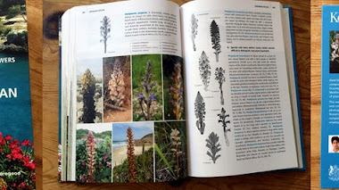 Guía de campo de flora silvestre. Field Guide to the Wild Flowers of the Western Mediterranean