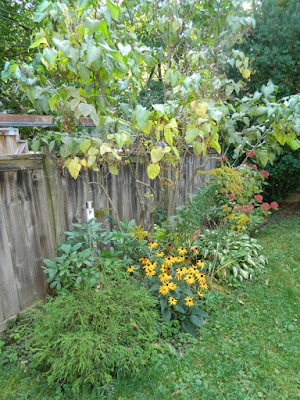 Riverdale backyard fall clean up before by Paul Jung Gardening Services Toronto