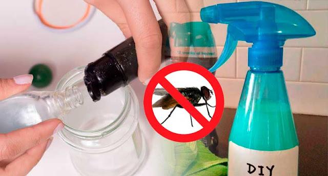Elimina las moscas de tu hogar para siempre con este truco - Como combatir las moscas ...