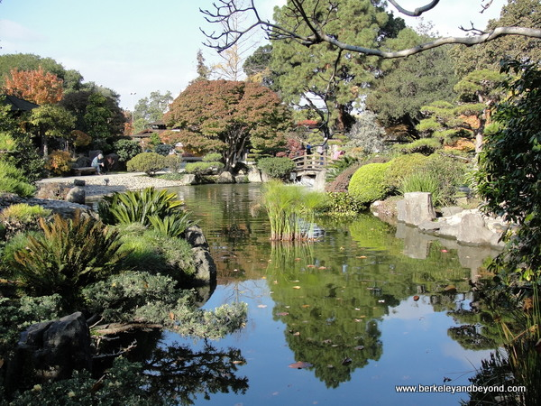 overview of Japanese Garden in Central Park in San Mateo, California