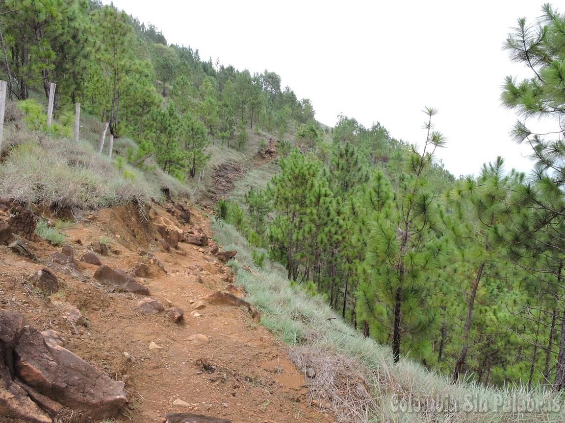 sendero y corta fuego para evitar los incendios forestales