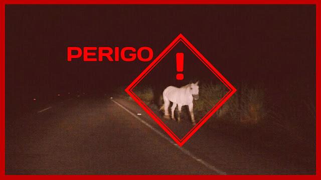 Cavalo na pista - alerta de perigo!