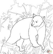 Black Bear Coloring Sheet