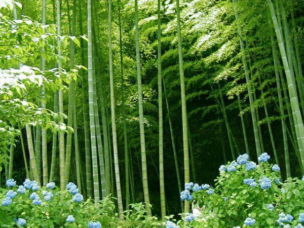 Rumpun Bambu