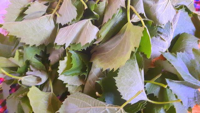 taze asma yaprağı saklama yöntemleri