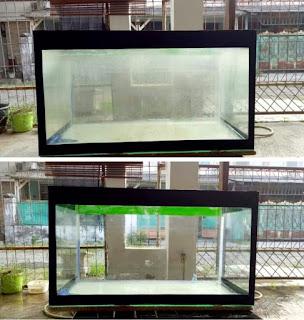 Cara membersihkan kaca aquarium yang berkerak