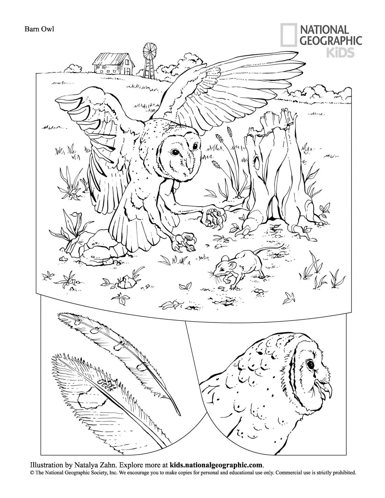 Livro De Colorir Animais Gratis Para Baixar Em Pdf Espaco