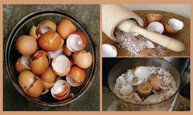 Usos de la cáscara del huevo