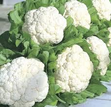फूल गोभी (Cauliflower)