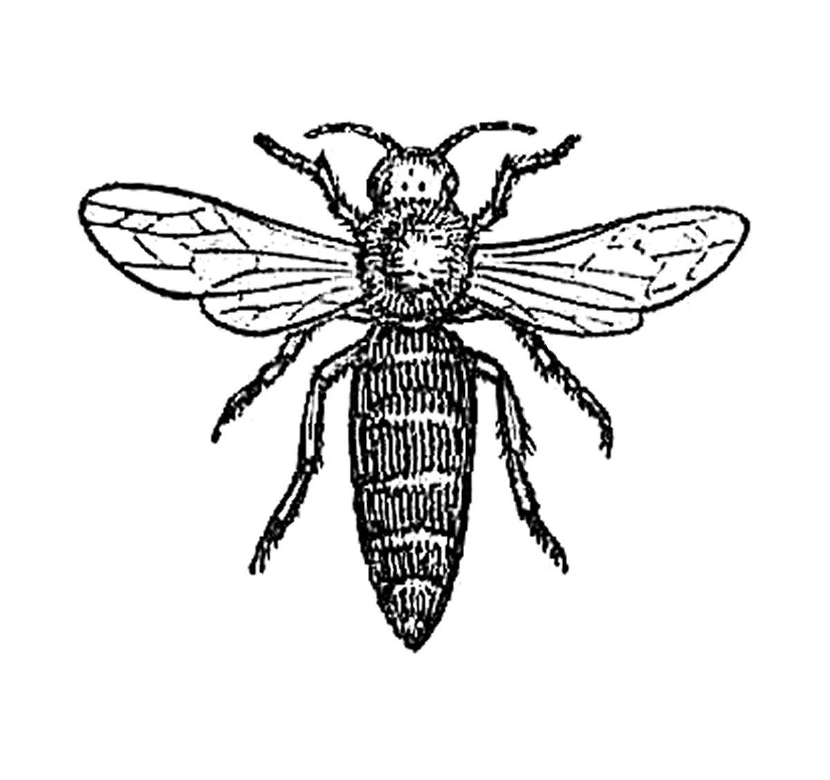 Antique Images Free Animal Graphic Image Transfer Design
