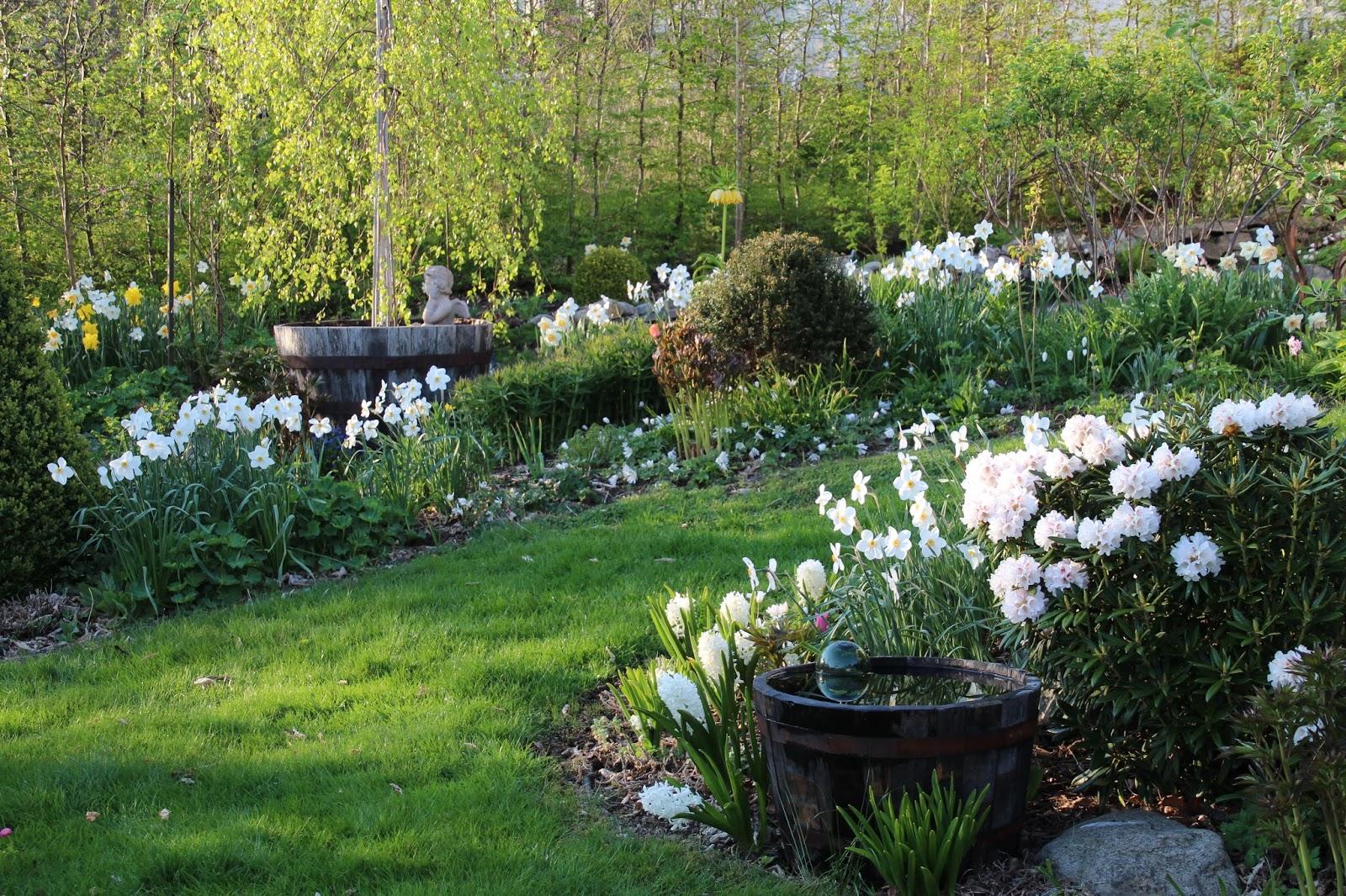 vårträdgård lökväxtblomning