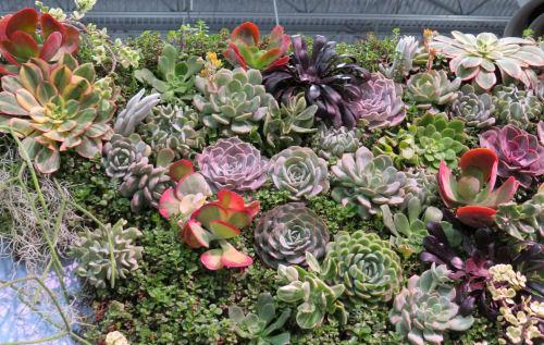green succulent wall