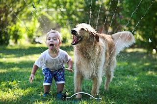 los perros te cuidan
