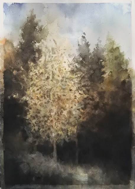watercolour painting of light on a tree by adam stolterman