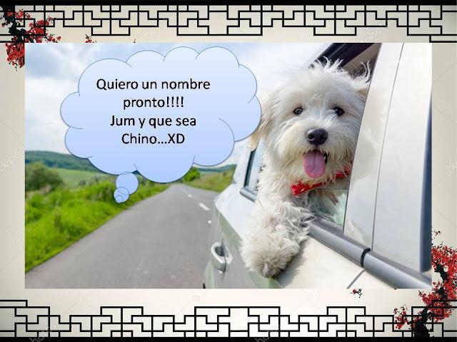 ✎Nombres Chinos para Perro: Originales, Significativos y Cortos