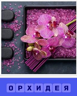 на подносе лежит букет цветов орхидея