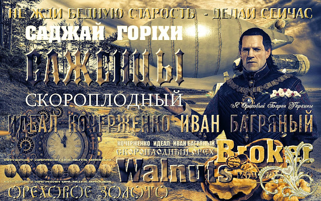 Однолетние саженцы ореха Кочерженко, 0957351986, 0985674877, Walnuts Broker