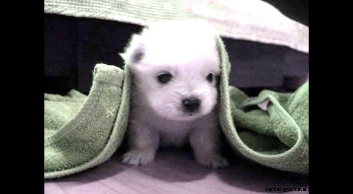 Cute Baby Dog Best Background Wallpaper