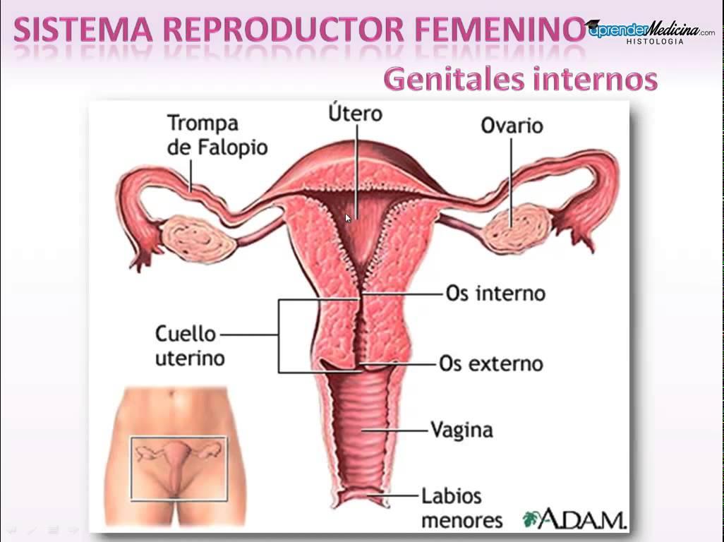 aparato reproductor femenino: 2016