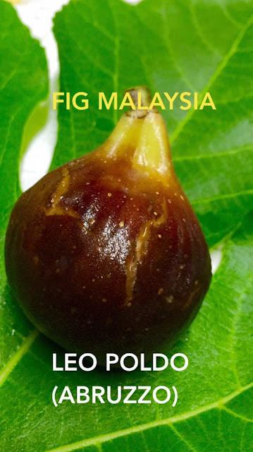 LEO POLDO ABRUZO Figs