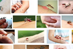 5 Reaksi Tubuh Saat di Gigit Nyamuk Bisa Berpengaruh Terhadap Kesehatan