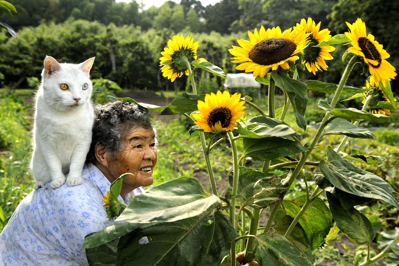 Fukumaru, The Friendliest Cat With Heterochromia-1