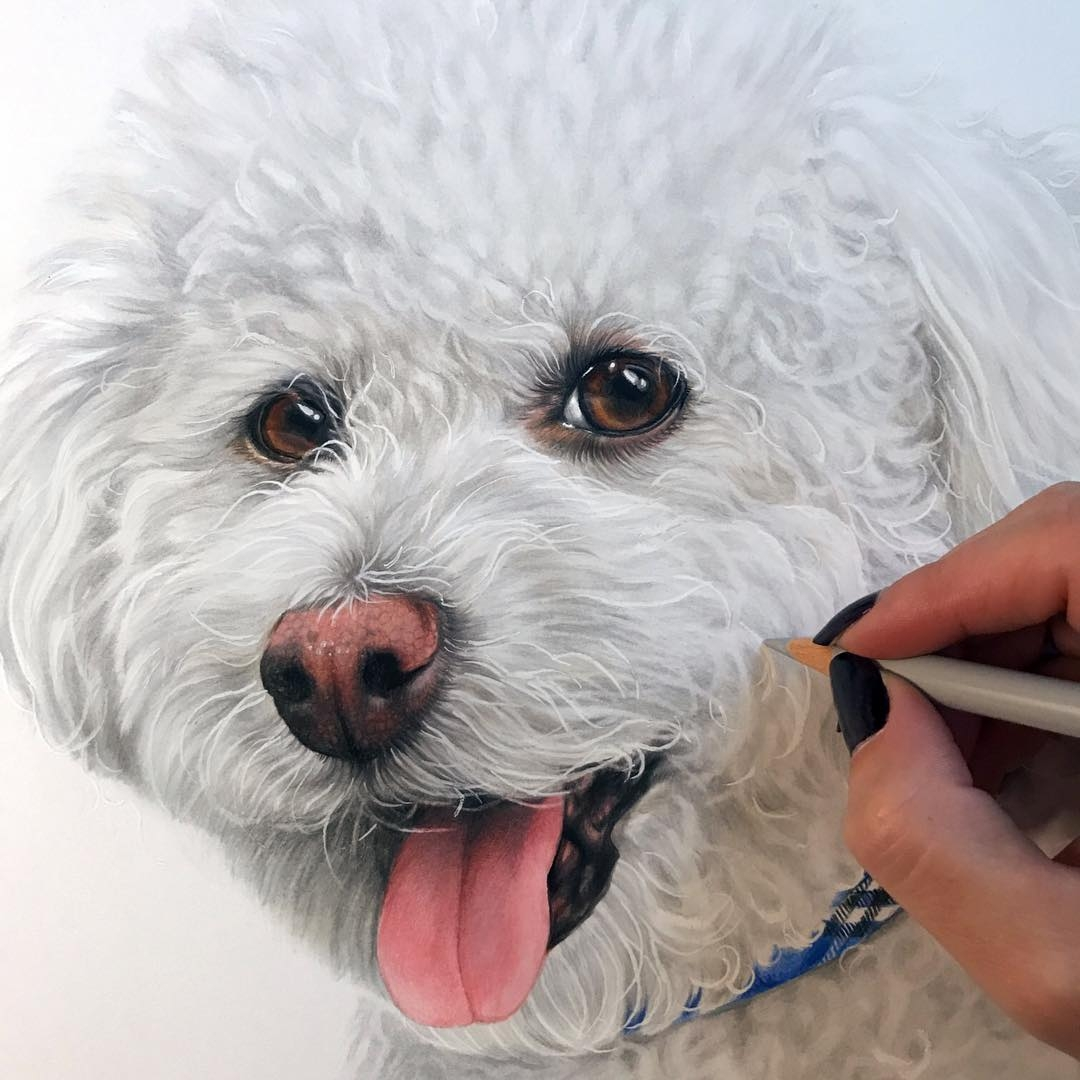 08-Cotton-Wool-dog-Kelly-Lahar-Realism-with-Animal-Portrait-Drawings-www-designstack-co