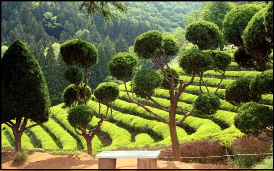 tempat wisata yang paling terkenal di korea selatan