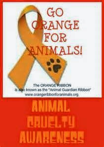 Going Orange For ASPCA