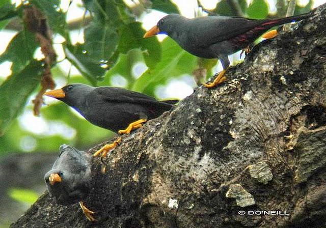 700 Gambar Burung Rio Rio Hd Gambar Id