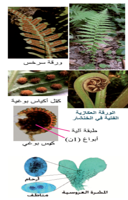 http://www.ar-science.com/2015/03/Vascular-plants-cryptogram.html